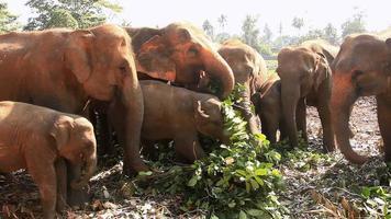 Elephants eat leaves.