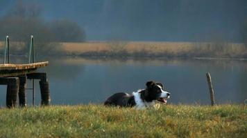 cão épico em câmera lenta pegando um pedaço de pau e ele estoura
