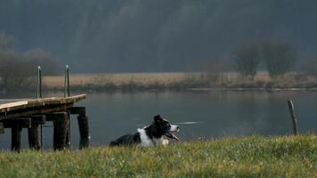 um cachorro pegando uma vara em câmera lenta