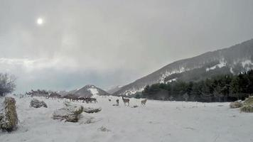 Group of Deer in Wildlife