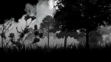 animación gráfica del bosque