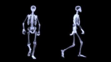 animação de radiografia em câmera lenta de um skelegon humano caminhando.