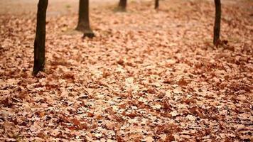 el viento lleva las hojas caídas del otoño