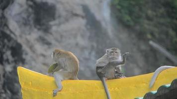 macaco família é descanso e corpo limpo