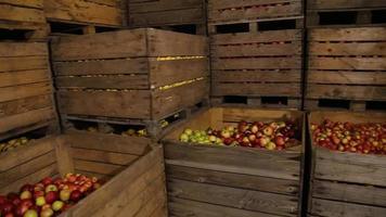 große Schachtel Äpfel