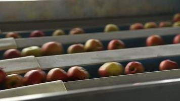 Apples on a sorting table in a warehouse video