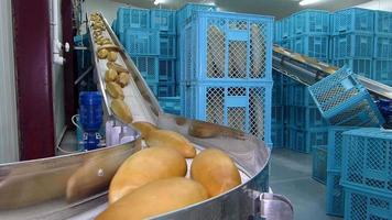 Fresh baked bread on conveyor belt in bakery