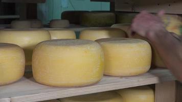bolas de queijo na sala de envelhecimento video