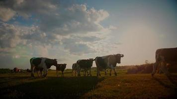 cena de verão de terras agrícolas ao pôr do sol video