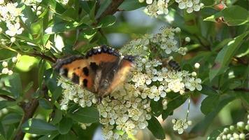 borboleta e abelhas