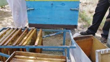 les abeilles dans le cadre