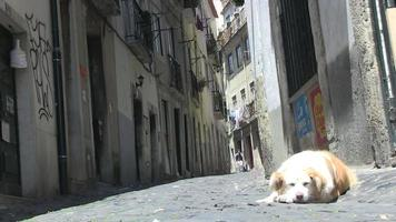 perro en un callejón