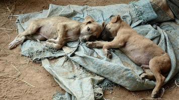 par de cachorros durmiendo en una lona de suelo