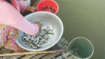 Femme triant les prises de poisson selon l'espèce et la taille, jetant celles à relâcher dans un filet à main