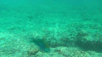 pesci tropicali