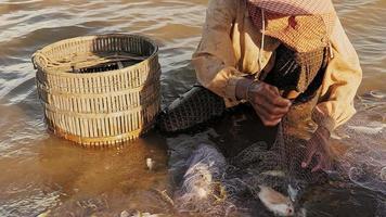 Fischerfrau, die im flachen Flusswasser sitzt, um verflochtenen Fischfang zu entfernen und ihn in einem Bambuskorb zu halten