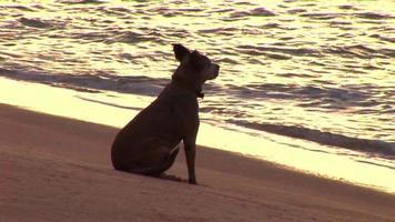 cane seduto sulla spiaggia