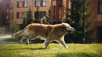laufender Hund Zeitlupe