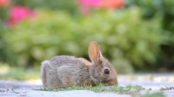 conejo comiendo hierba video