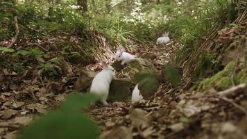 conejitos blancos en el bosque