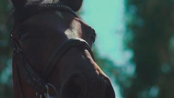 os olhos do cavalo. cavalo focinho. cavalo piscando em câmera lenta video