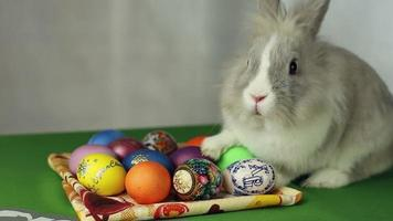 Easter Bunny with Easter eggs video