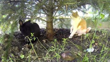lapin noir jouant avec un chat jaune sous le pin