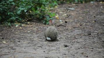 petit lapin gris mange de l'herbe