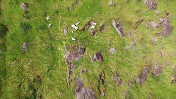 Aerial footage of sheep grazing on mountain slope