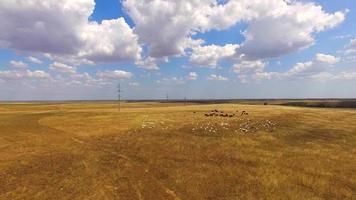 cabras y vacas pastando en tierras de cultivo