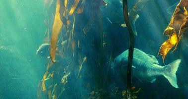 peixes nadando em um aquário