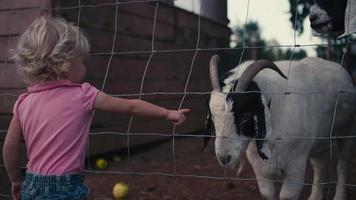 Una linda niña hablando con cabras a través de una cerca en una granja.