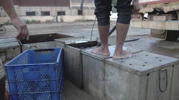 Transfer lebender Fische von Angelboxen zu Kisten mit einem Handnetz