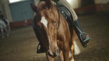 filmati delle gambe del cavallo che attraversano la stalla.