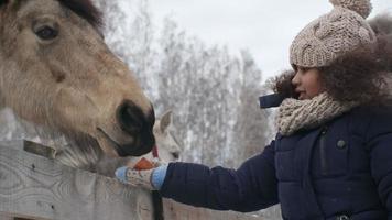 niña alimentando caballos
