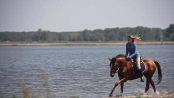 Cheval arabe brun galopant sur le lac