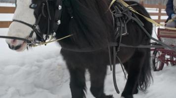 poney tirant un chariot avec des petites filles