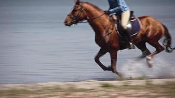 cavalo marrom galopando rápido na água video