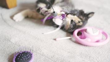un gattino che gioca con un giocattolo che penzola da dietro la telecamera