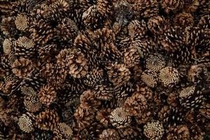 Top view of pine cones
