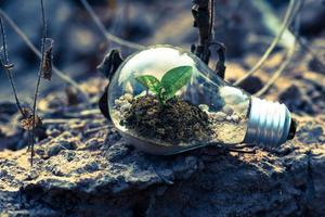 Light bulb with plant photo