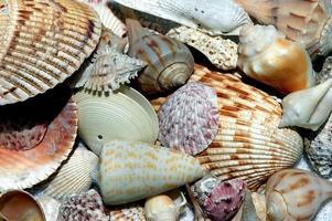 conchas de mar en la playa