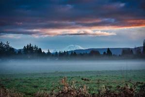 Foggy green grass field photo