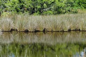 Tropical swamp landscape photo