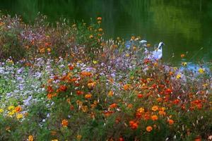 jardín de flores y pájaro cerca de un lago en el parque