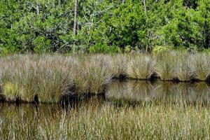 Tropical wetland landscape photo
