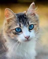bonita cara de gato
