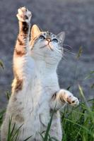 Cat standing-up in the grass