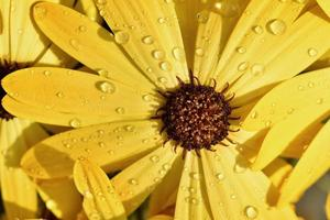flor amarela com gotas de chuva