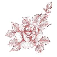 Hand drawing and sketch roses floral design vector